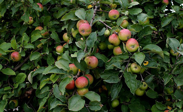 Tips to Increase Fruit Production from Fruit Trees