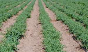 Introduction to Drip Irrigation Systems