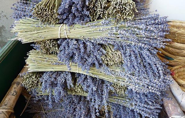 harvested provence lavender