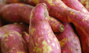 Growing Sweet Potato in Your Garden