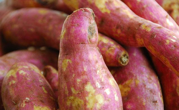 Growing Sweet Potato in Your Garden