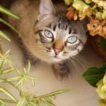 Some Cat-Friendly Plants You Can Grow At Home
